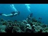 Экстремальная порка в глубине океанских коралловых рифов